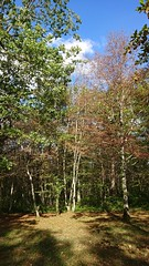 Wood. - Photo of Montliot-et-Courcelles