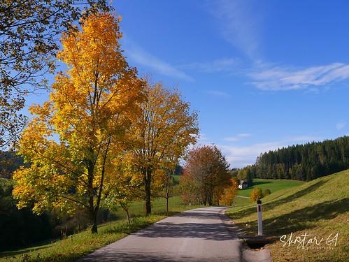 Herbst-Impressionen (1)