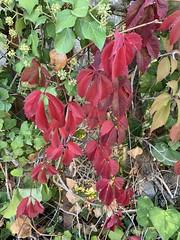 Les premières couleurs sanglantes de l'automne.