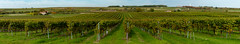 Pays du Cognac - L'automne en Grande champagne - Photo of Segonzac
