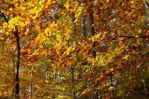 Herbst '19