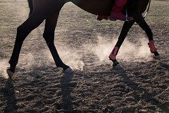 Pferd wirbelt Staub auf