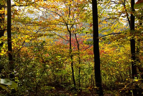 Farbtöne - Herbst '19