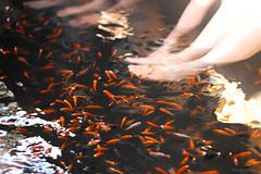 Fish eating-3