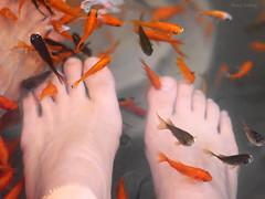 Fish eating-6