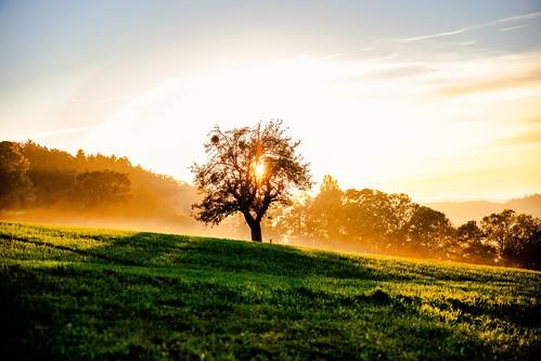 Soleil et brume d'automne