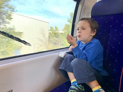 Sawyer enjoys the train ride to Orange - Photo of Morières-lès-Avignon
