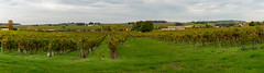 Pays du Cognac - L'automne en Grande champagne