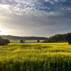 Leuchtendes Münsterland