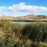 Corte de carrizo para mejorar la visibilidad desde el observatorio. Lagunas de La Guardia (Toledo) 27-10-2019