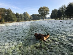 Mr Chip on a cold frosty morning walk