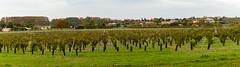Saint Fort sur Le Né - Grande champagne [Charente] - Photo of Jarnac-Champagne