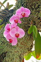 DSC00805 - Orchid