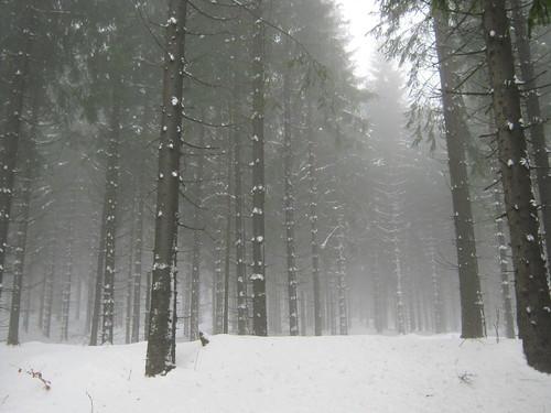Allzunah im Winter