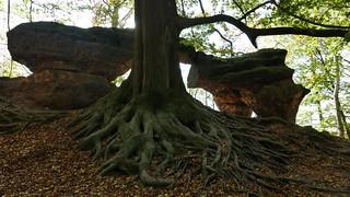 Nature art -near the Malerweg