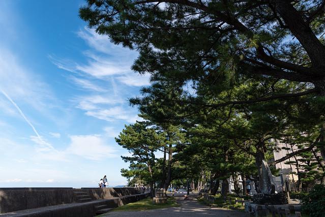 Photo:二見の公園の松 By Mio:D