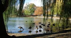 Bowne Park,...Queens