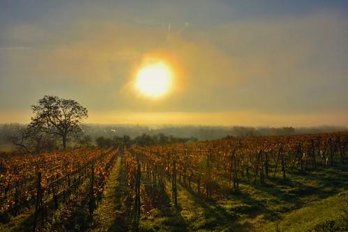 Herrlisheim-prés-Colmar, un petit matin d'automne