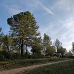 Forêt domaniale du Baillarguet. - Photo de Clapiers (France) le 27/10/2019
