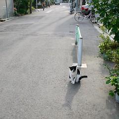 #Tokyo #日本 #東京 #Japan #cat #猫 #ネコ #ねこ #alleycat #野良猫 #Straycat #流浪猫 #Gatocallejero #Chaterrant #도둑고양이 #Katze #chat #gatto #gato #feles #кошка #KAT #gato #고양이 #kočka #kass #муур #pisică #my_eos_photo #Canon #EOS Kiss Digital X Canon EF-S 18-55mm f/3.5-5.6