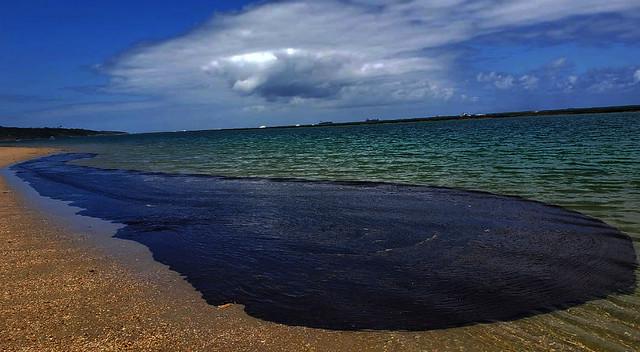 Segundo o Ibama, manchas de óleo já chegaram a 249 localidades do Nordeste - Créditos: (Foto: Salve Maracaípe/Fotos Públicas)