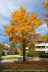 Herbst in Winterthur