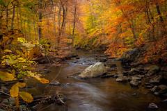 Autumn Creek No.1