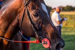 Portrait eines Pferds. Nahaufnahme
