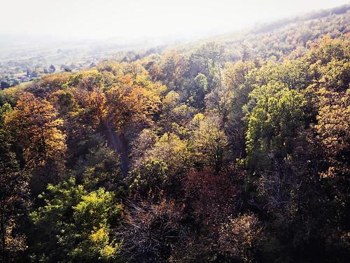 Autumn Love #autumn #parrotanafi #wineyards