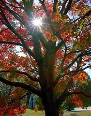 """Cincinnati - Spring Grove Cemetery & Arboretum """"Sunburst Over Bogman Mausoleum"""""""