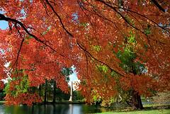 "Cincinnati - Spring Grove Cemetery & Arboretum ""Autumn Over Obelisk"""