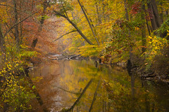 Autumn Creek No. 3