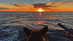 Kennedy The Sea Dog That Loves Boating Sunsets - IMRAN™