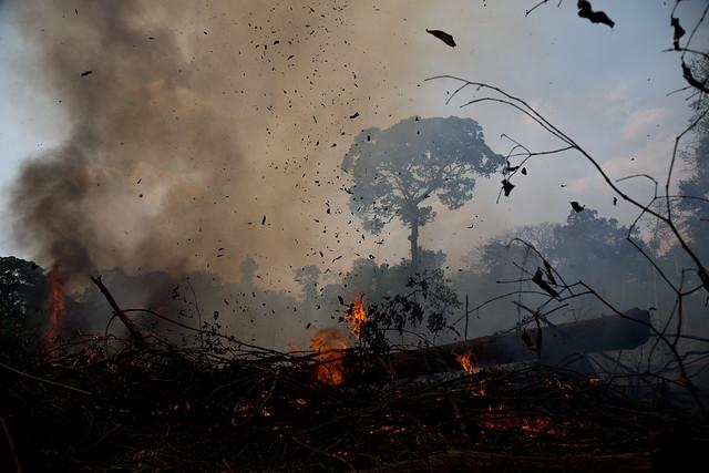 """""""A infelicitada Amazônia, em vez do preconizado paraíso tropical, tornou-se inferno cujas chamas transformam a floresta em pasto para gado"""" - Créditos: Foto: Mídia Ninja"""
