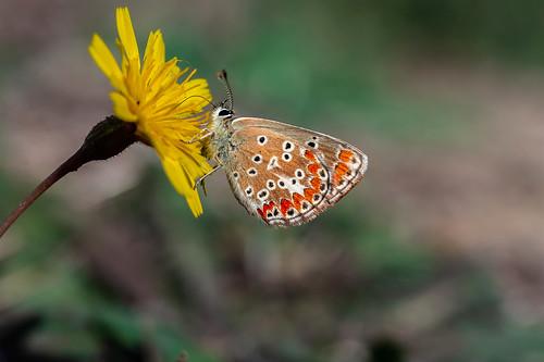 Todavía se ven mariposas
