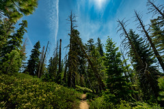 2019-07-06-Azure, Woods-9