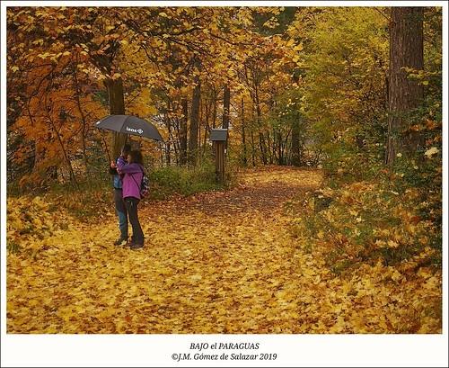 Lluvia de otoño / Autumn rain
