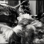 Bellatrix napping