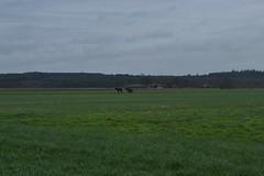 Paarden op een wei bij Dalmsholte (135FJAKA_2956)