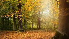 Autumn 2019 #1 - Photo of Auchy-lez-Orchies