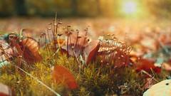 Autumn 2019 #2 - Photo of Auchy-lez-Orchies