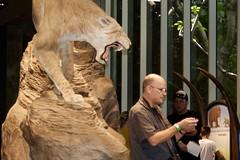 Sabre toothed cat ambushes Ian  DSC_0875 (1)