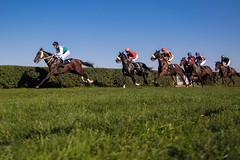 Horse racing on grass track surface