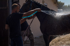 Horse being washed by its owner