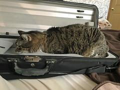 Cuffy in the fiddle case2