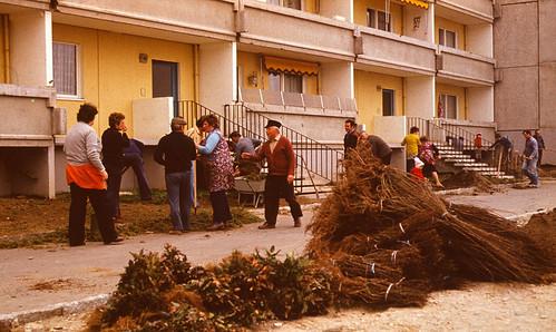 Subbotnik auf der Otto-Knoch-Straße ( Frühjahr 1982)