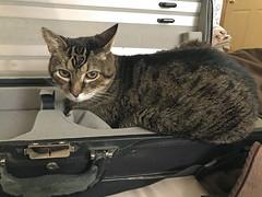 Cuffy in the fiddle case1