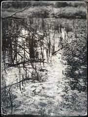 Galien River marsh