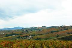 2019-10-17 10-21 Lyon 145 Chiroubles, Le Plateau de Grille-Midi