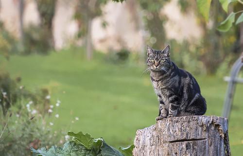 Le chat du parc